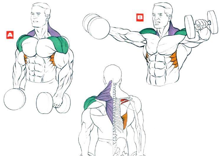 Накачать мышцы плеч эффективными упражнениями в спортивном зале и дома.