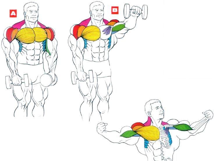 Упражнения для плеч (дельты). Накачать грудь. Подъем гантелей перед собой