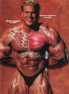 ГРУДНЫЕ: Muscle & Fitness №9 2001