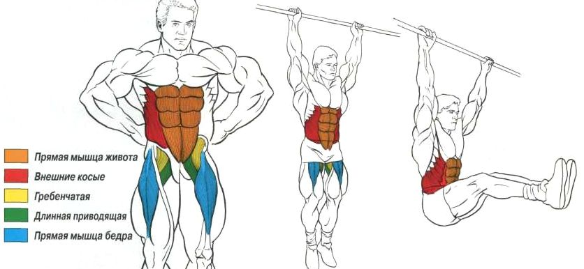 Работа мышц и суставов