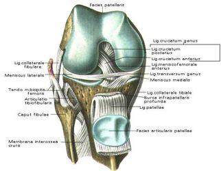 Коленный сустав капсулах протезирование тазобедренного сустава в москве